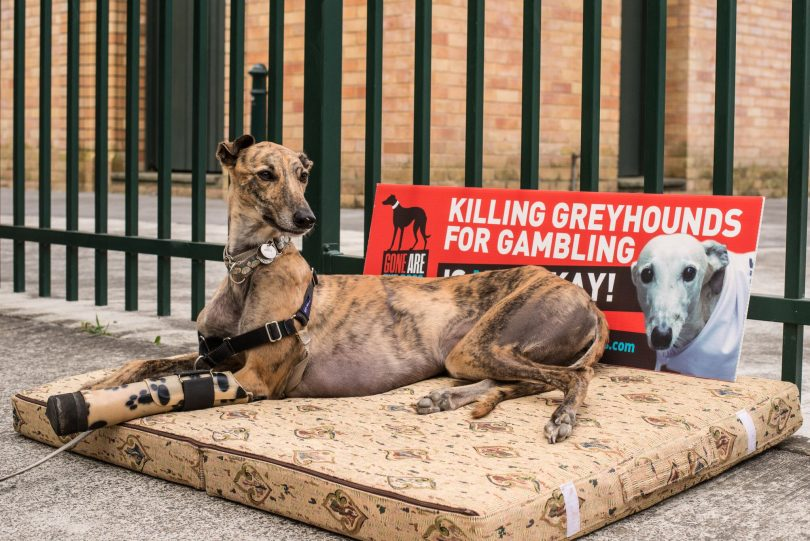 Bring Jack Home' – the plight of stranded racing dogs in